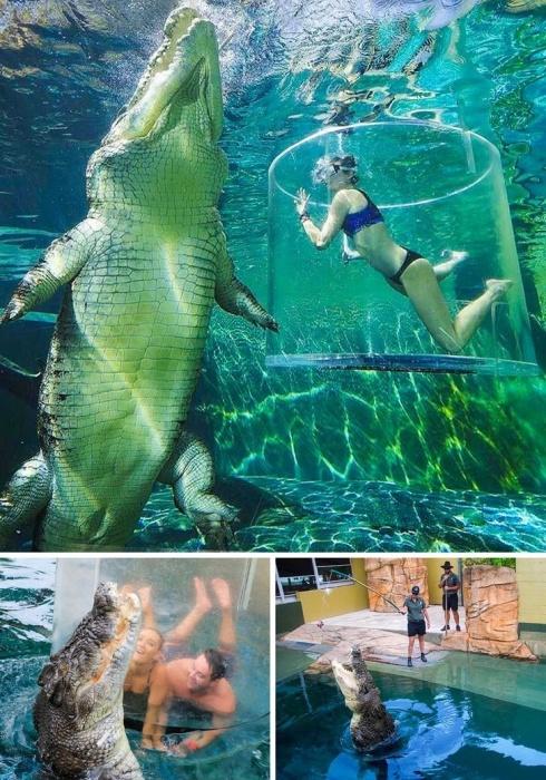 Любители экстремальных развлечений в этом бассейне могут встретиться нос к носу с гигантским крокодилом (Crocosaurus Cove, Австралия).