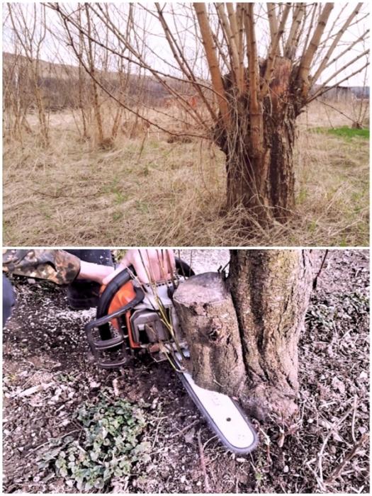 Дерево или оставшийся ранее пень нужно спилить максимально близко к земле.