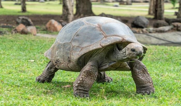 Основным условием лота стало обязательное содержание 95-летней черепахи по имени Геркулес.   Фото: english-country-cottages.co.uk.