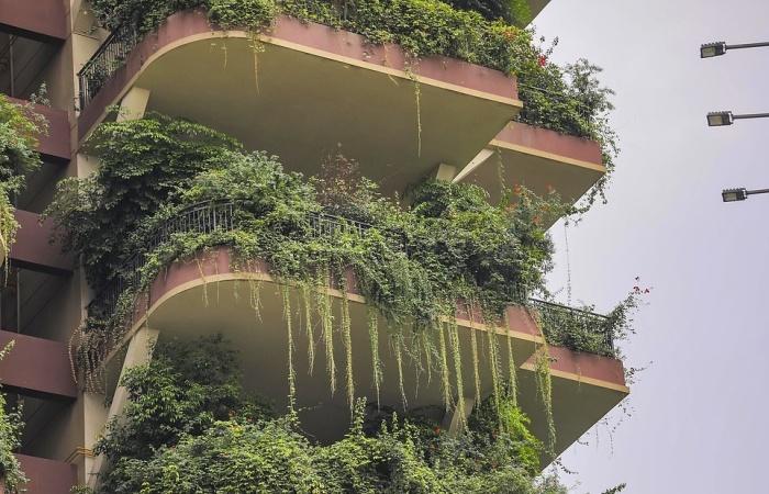 Растения почти полностью поглотили все балконы и террасы, и уже свисают с перил небоскребов (ЖК «Qiyi City Forest Garden», Китай). | Фото: dailymail.co.uk.