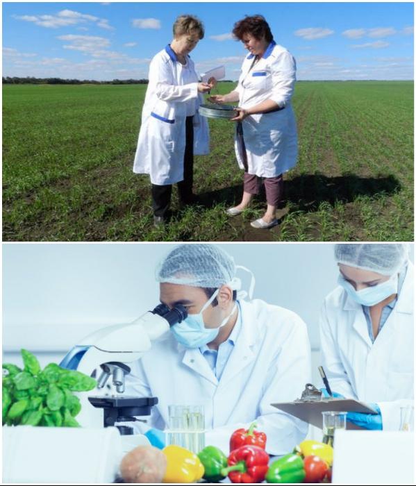 В России требования к выращиванию, обработке, хранению и переработке сельхозпродукции выше, чем в Китае. | Фото: proforientator.ru/ agronomu.com.