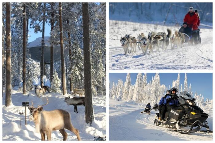 Любителям зимних развлечений можно смело отправлять в отель на деревьях Treehotel.