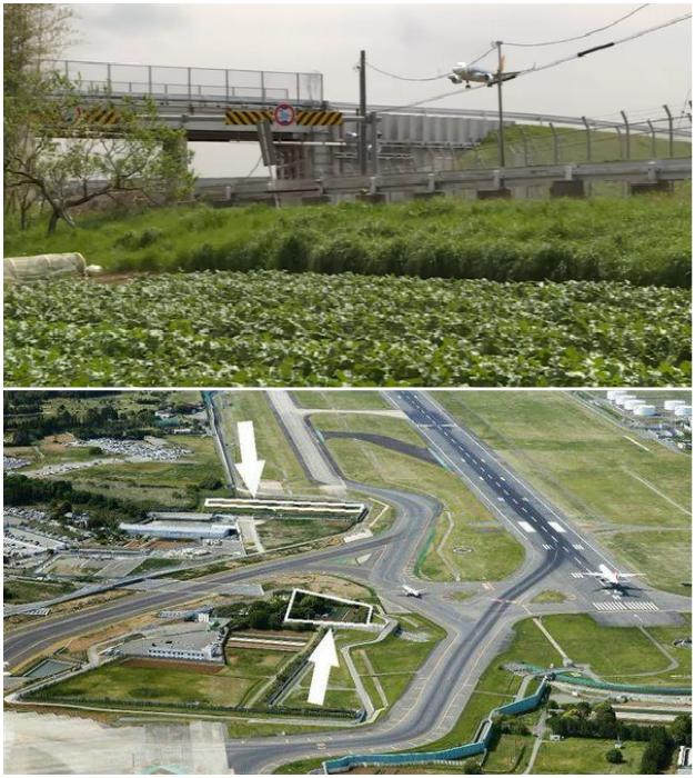 Угодья Такао Шито оказались зажатыми между рулевых дорожек и взлетно-посадочных полос (Narita international airport, Япония).