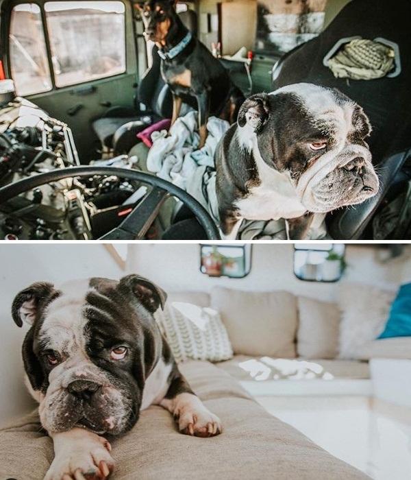 Собакам в мобильном доме позволено все! | Фото: instagram.com/ @wazimulife.