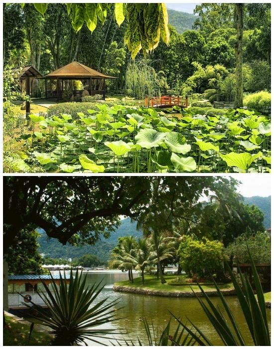 Удивительные экспонаты представлены в ботаническом саду Рио де Жанейро (Бразилия). | Фото: yandex.kz.
