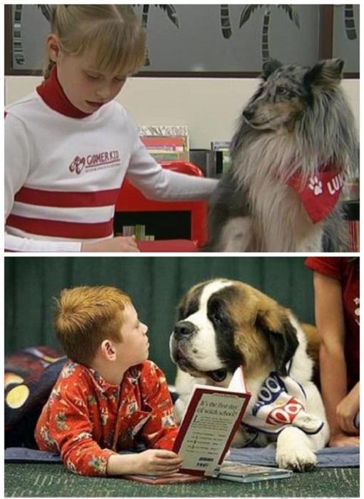 В штат сотрудников библиотеки входят собаки, которые обучены внимательно слушать, когда ребенок учится читать (Центральная библиотека Oodi, Хельсинки).