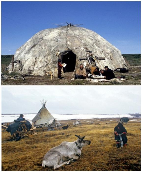 Яранга и чум – традиционное жилище народов Северных регионов России. | Фото: news.rambler.ru.