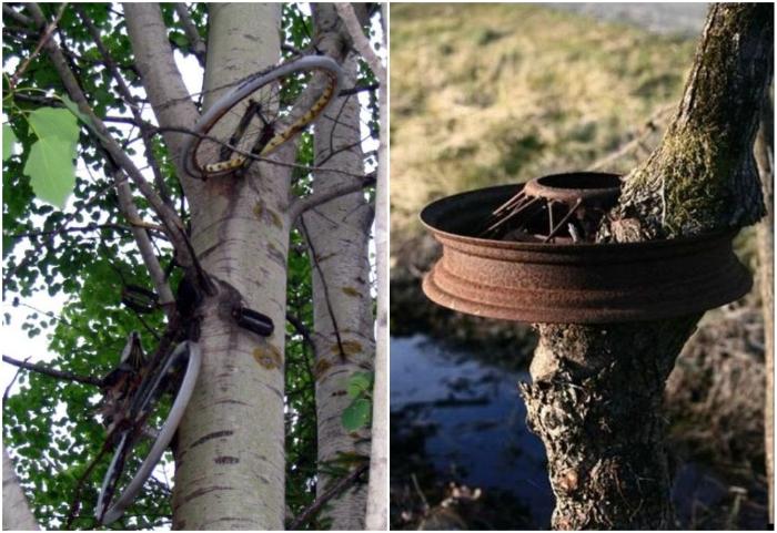 Не стоит надолго оставлять свои транспортные средства и детали от них возле молодых деревьев. | Фото: agrodoctor.livejournal.com/ trinixy.ru.