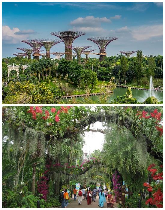 Фантастический «Сад у залива» имеет просто нереальное ландшафтное оформление (Singapore Botanic Gardens). | Фото: lifter.com.ua.