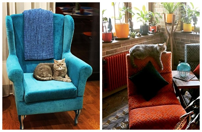 Кот знает, кто в доме хозяин (квартира Юлии Меньшовой).