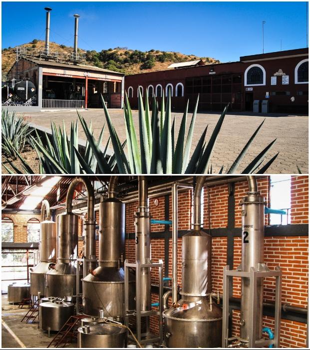 Гости могут посетить производственные цеха завода («Matices Hotel de Barricas», Мексика).   Фото: tequilacofradia.com.mx.