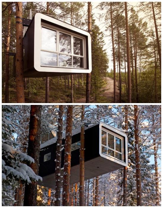Бунгало «Cabin» расположено на высоте 4,5 метров над землей (эко-отель Treehotel, проект студии Cyren & Cyren). | Фото: sergeybond.livejournal.com.