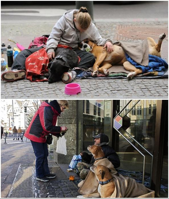 В Германии бездомным доплачивают на содержание каждой собаки.