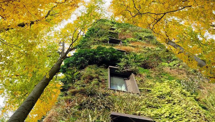Вертикальное озеленение OAS1S – красота, комфорт и всегда свежий воздух в доме (концепт фонда OAS1S ™). | Фото: lifter.com.ua.