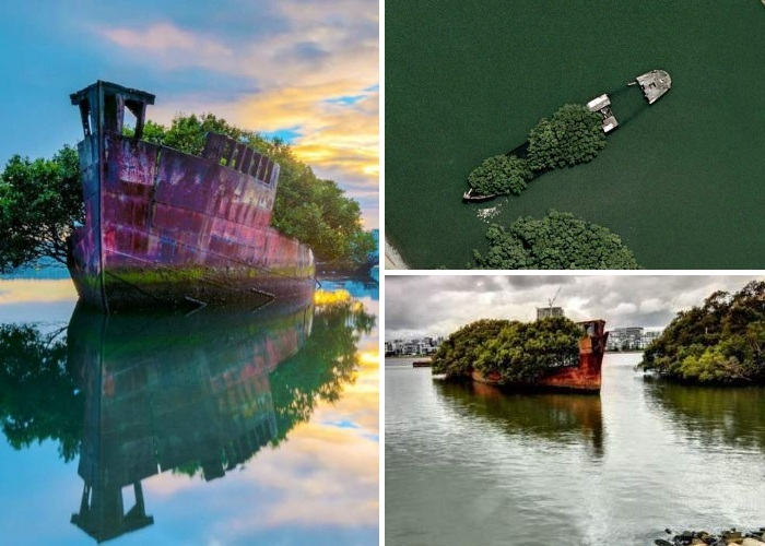 Вторя жизнь заброшенного корабля «Плавающий лес» привлекает туристов и фотографов, превратив его в идеальную модель (Австралия). | Фото: free-eyes.com.
