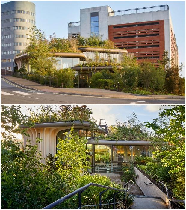 26-й онкоцентр Maggie's Centre был построен в Лидсе по проекту студии Томаса Хизервика (Великобритания).