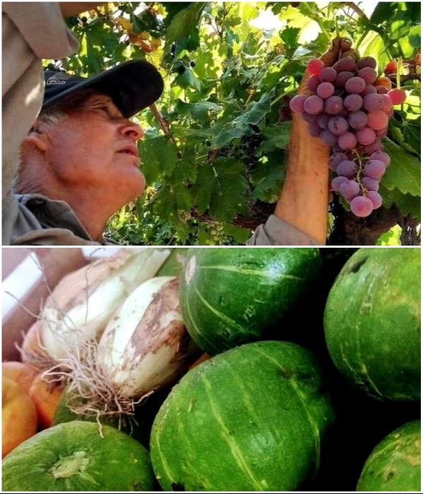 Для приготовления вкусных и полезных блюд владельцы гостиницы сами выращивают экологически чистые фрукты и овощи («CasArtero Eco Posada», Сан-Рафаэль). | Фото: glampinghub.com.