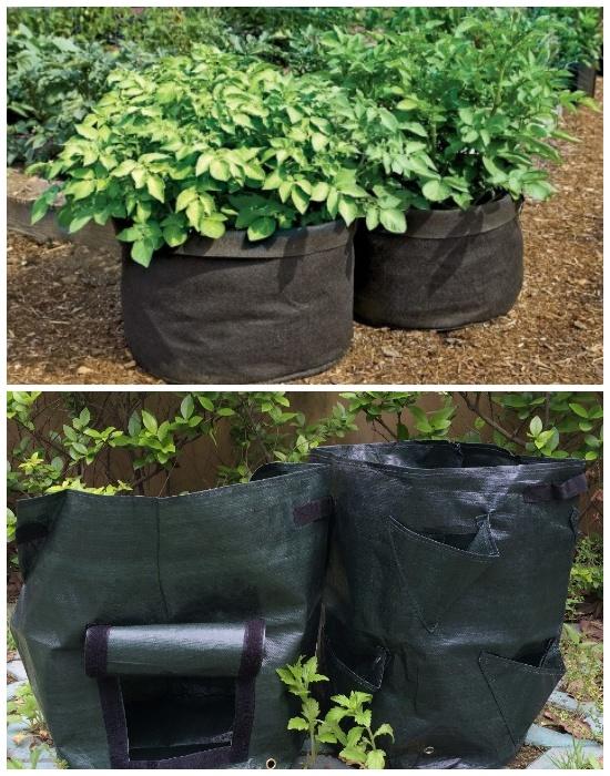 Многие овощи целесообразней выращивать в мешках или полиэтиленовых пакетах.