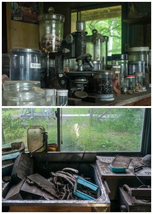 В лаборатории осталось все оборудование (Запасник Научно-исследовательского института змей, Япония).