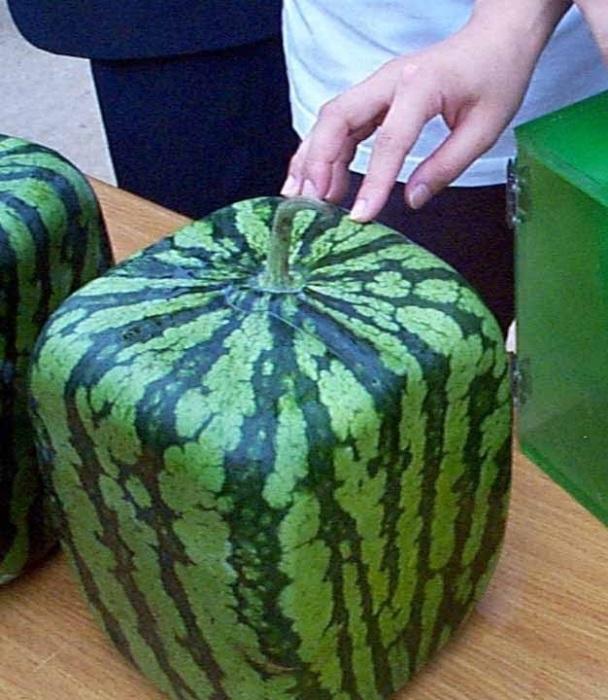 Арбуз нужно прижать пальцем, если кожура твердая – значит плод спелый. redplatecatering.com.