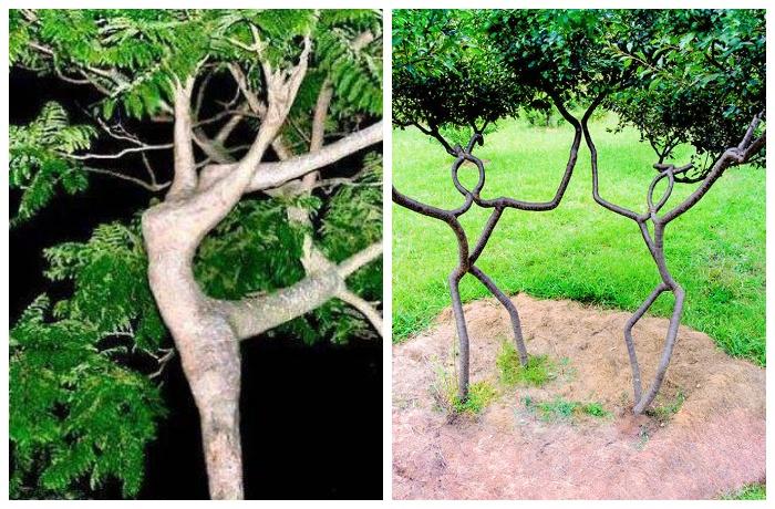 Живая скульптура станет самым оригинальным украшением любого участка.