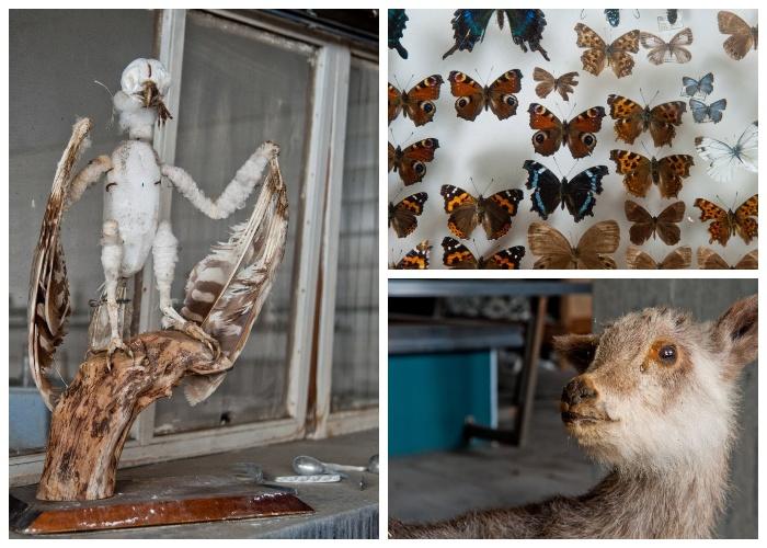 В музее были собраны коллекции представителей обитающей в окрестностях вулкана фауны (Музей вулканологии у подножия вулкана Асама, Япония).