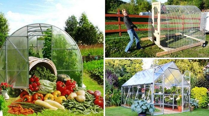 Если правильно организовать теплицу на своем участке, то урожай может радовать круглый год.
