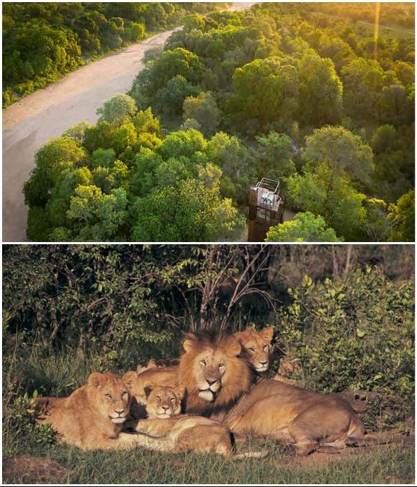 Полная удаленность от цивилизации предусматривает опасное соседство с дикими животными («Ngala Treehouse», Kruger National Park). | Фото: runet.lol/ luxurytravelmag.com.au.