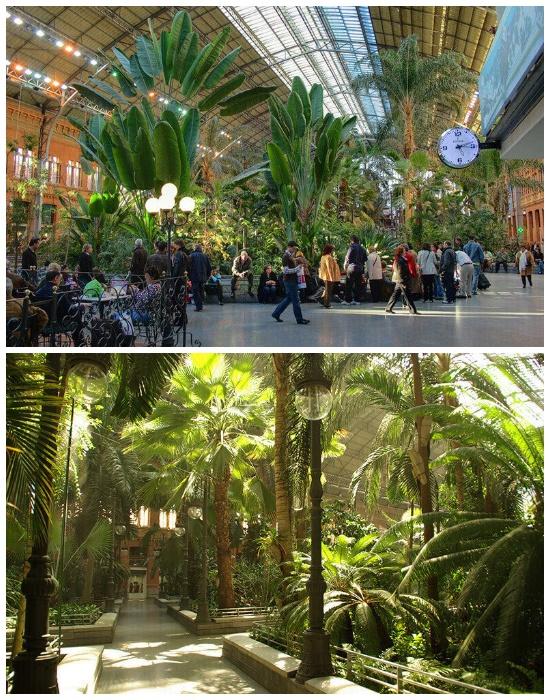 Самая экзотическая и зеленая станция метрополитена Estación de Atocha находится в Мадриде (Испания).