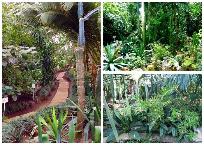 В оранжереях Полярно-альпийского ботанического сада удалось прижиться многим тропическим растениям (Россия). | Фото: vk51.ru.