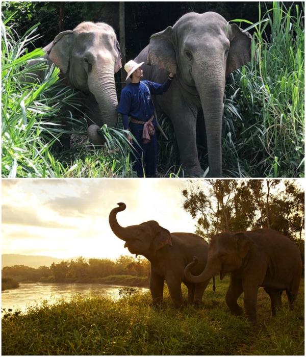 На территории курортного комплекса свободно гуляет около 60 слонов, за которым присматривает целый штат сотрудников заповедника («Anantara Golden Triangle Elephant Camp & Resort», Таиланд). | Фото: styleinsider.com.ua/ boredpanda.com.