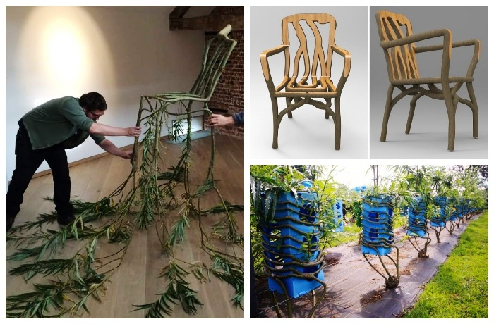Дизайнерскую мебель выращивают в Англии.