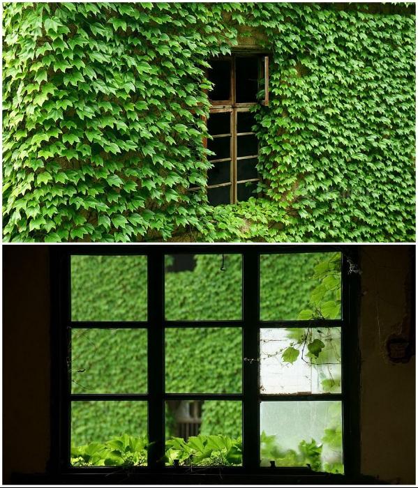 Пустые глазницы окон вызывают зловещий холодок (Houtouwan, Китай). | Фото: bigpicture.ru/ mydiscoveries.ru, © Jane Qing.
