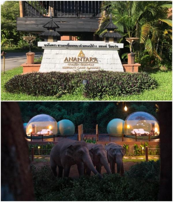 В Таиланде туристы могут переночевать в прозрачных номерах-пузырях в окружении слонов. | Фото: styleinsider.com.ua/ youtube.com/ © MrKesavaraj.