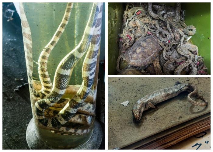 Вся лаборатория завалена трупами змей и другими пресмыкающимися (Запасник Научно-исследовательского института змей, Япония).