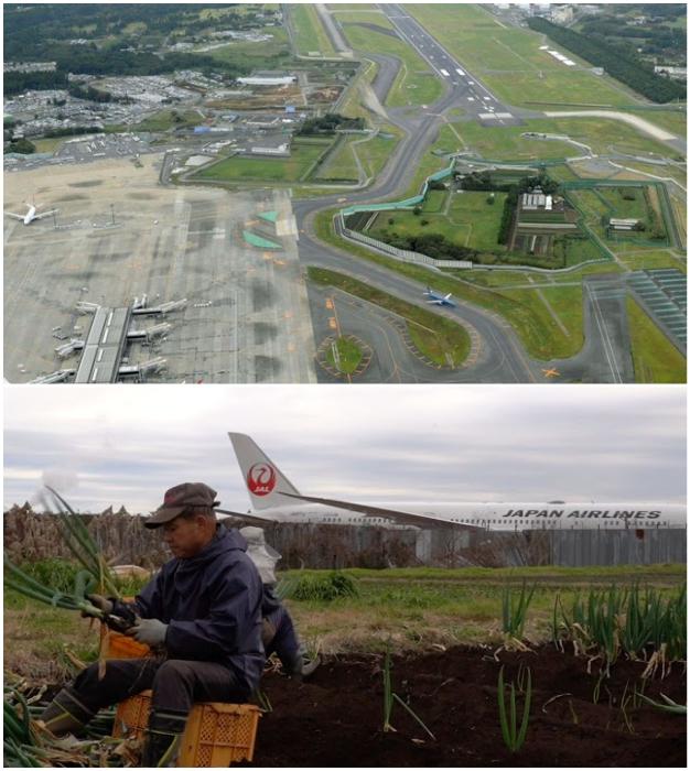 Пилотам приходится маневрировать между угодий несговорчивого фермера (Narita international airport, Токио).