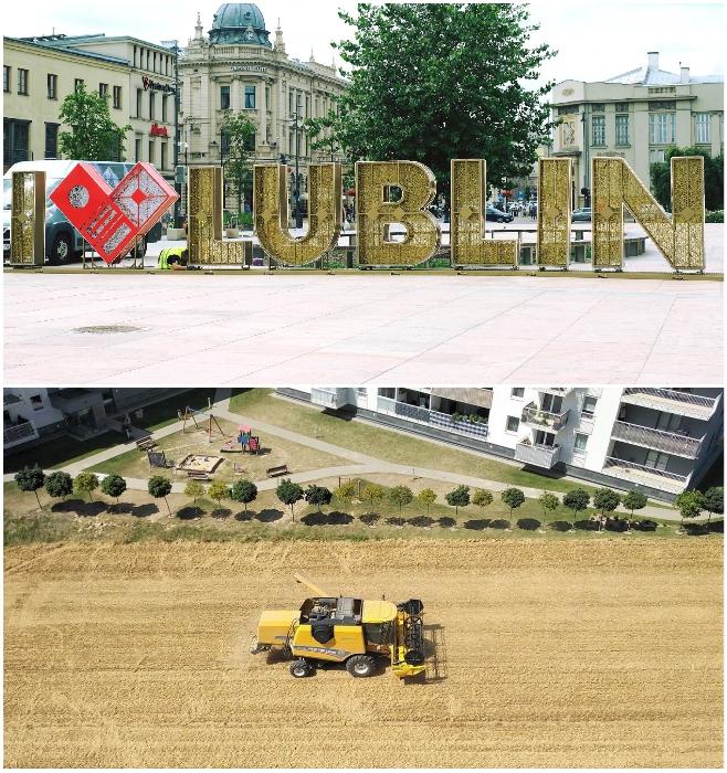 В одном из новых микрорайонов Люблина между домами посажены поля пшеницы (Польша). | Фото: youtube.com/ © Michal Myslowski.
