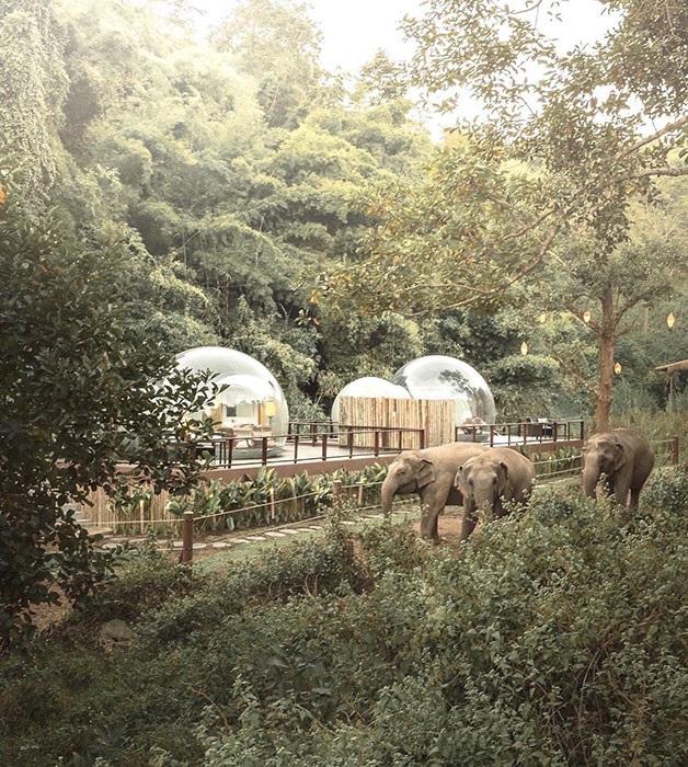 Роскошная тропическая зелень окружает курорт «Anantara Golden Triangle Elephant Camp & Resort», расположенный на территории 650 тыс. кв.м. (Таиланд). | Фото: styleinsider.com.ua.