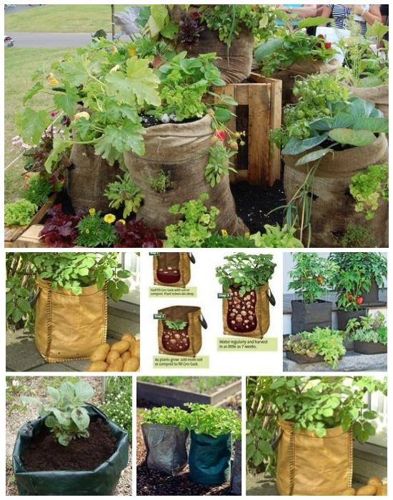 Выращивание овощей в мешках с почвосмесью.