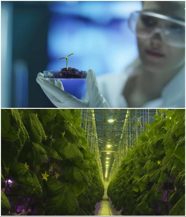 Использование разработок биотехнологий позволит обеспечить людей экологически чистыми продуктами питания (NEOM). | Фото: youtube.com/ © ArchDaily.