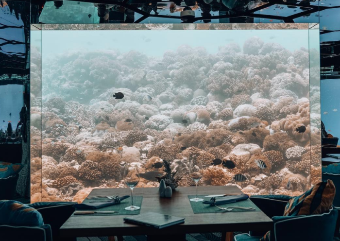 Импровизированный «театр» с рыбами и кораллами в главной роли можно увидеть за панорамными окнами ресторана (Sea Underwater Restaurant, Мальдивы). | Фото: mydernmet.com.