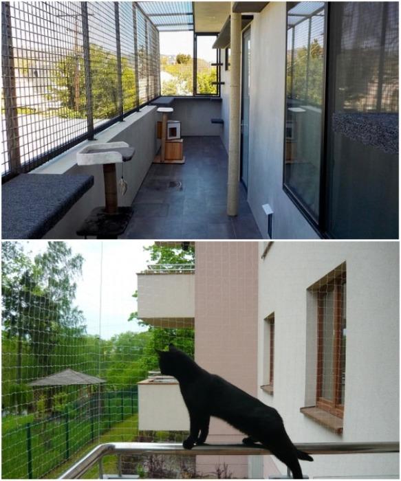 Балкон можно превратить в место совместного отдыха с питомцем на свежем воздухе. | Фото: interiorsroom.ru.