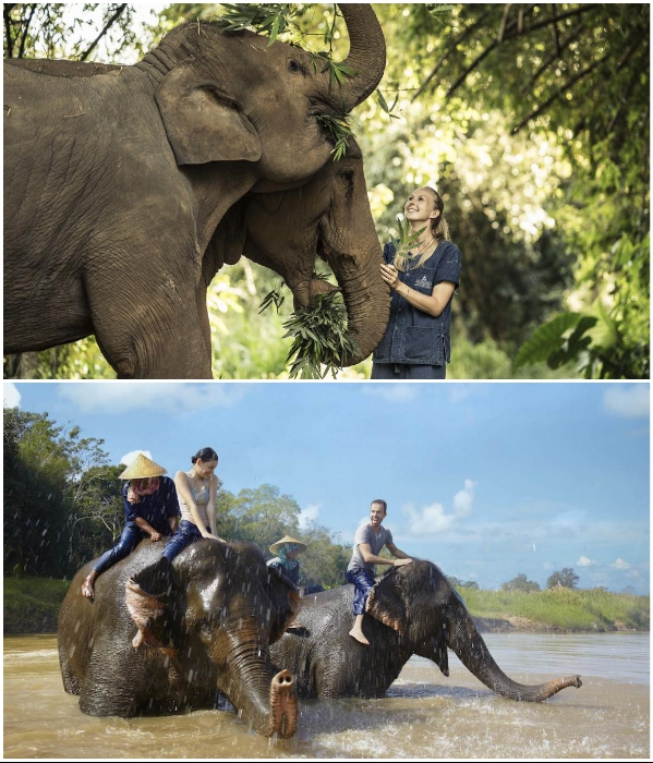 В присутствии сотрудников заповедника можно устроить обнимашки со слонами и вместе с ними искупаться в реке («Anantara Golden Triangle Elephant Camp & Resort», Таиланд). | Фото: booking.com/ greenglobe.com.