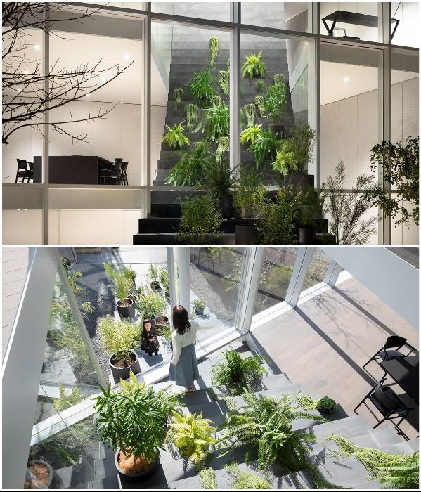 Ступени скульптурной лестницы служат своеобразными подставками для настоящей оранжереи («Stairway House», Токио). | Фото: worldarchitecture.org.