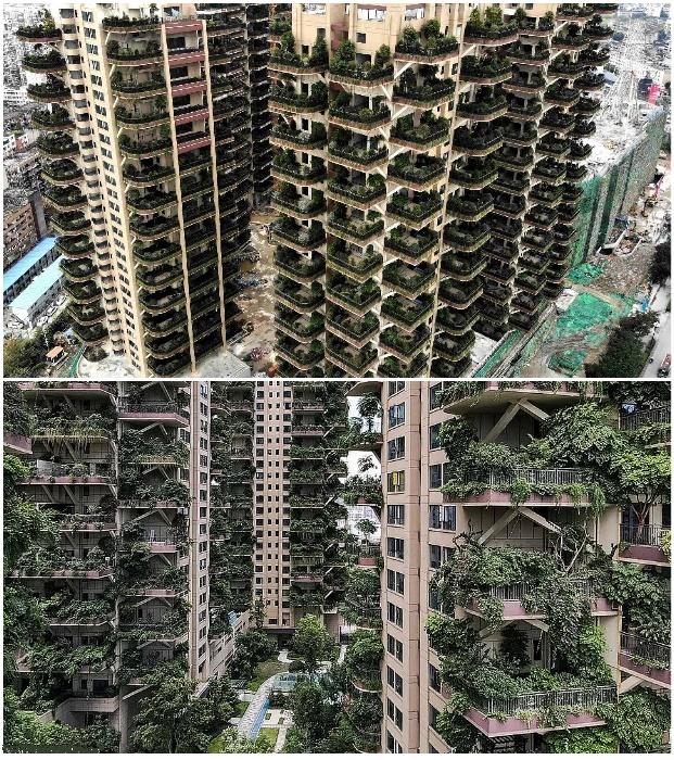 Экологический рай постепенно превращается в жуткие заросли (ЖК «Qiyi City Forest Garden», Китай). | Фото: dailymail.co.uk.