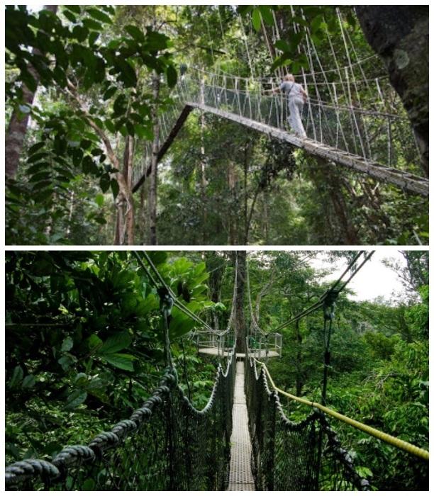 Прогулка по тропе расположенной на высоте 40 метров не для слабонервных. | Фото: iwokramacanopywalkway.com.
