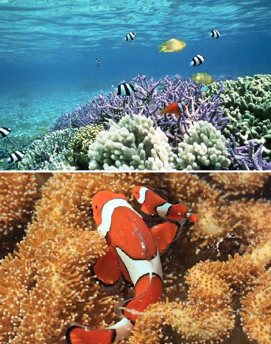 Идиллический остров Low Isles окружает 55 га коралловых рифов (Порт-Дуглас, Австралия). | Фото: quicksilvergroup.com.au/ openwaterchallenge.blog.