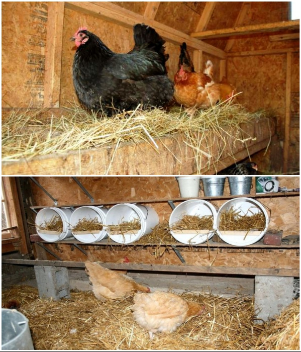 В любом птичнике нужно оборудовать насесты для кур. | Фото: pinterest.com/ news.rambler.ru.