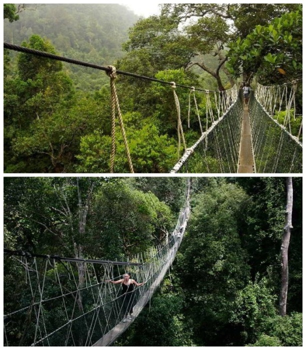 Подвесная тропа в национальном парке Таман-Негара (Малайзия). | Фото: bharian.ru.