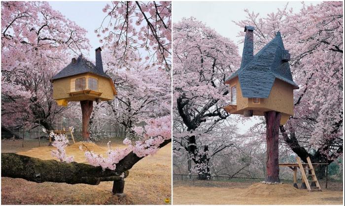 Сказочно красивый чайный домик на дереве «Tetsu» на острове Хокуто (Япония). | Фото: funtema.ru/ cacadoresdelendas.com.br.